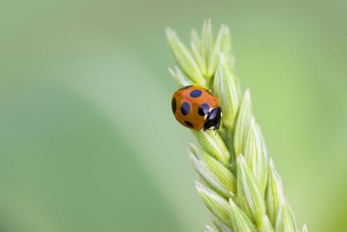 Small ladybug on a stem